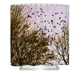 Shower Curtain featuring the photograph Birds Of A Feather Flock Together by Thomasina Durkay