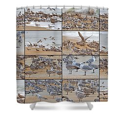 Birds Of Many Feathers Shower Curtain