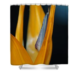 Birds Of Paradise Shower Curtain by Matt Harang