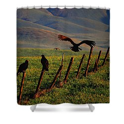 Birds On A Fence Shower Curtain by Matt Harang