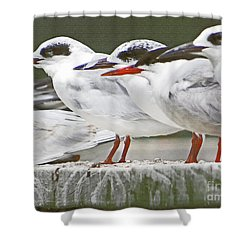 Birds On A Ledge Shower Curtain