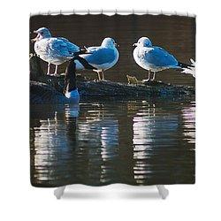 Birds On A Log Shower Curtain