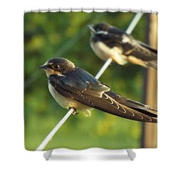 Birds On A Wire Shower Curtain by Caryl J Bohn