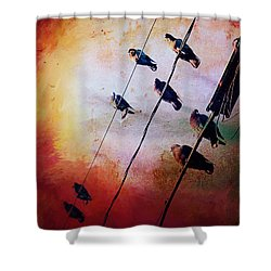 Shower Curtain featuring the photograph Birds On A Wire by Micki Findlay