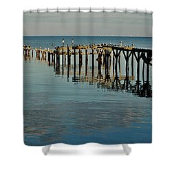 Birds On Old Dock On The Bay Shower Curtain by Michael Thomas