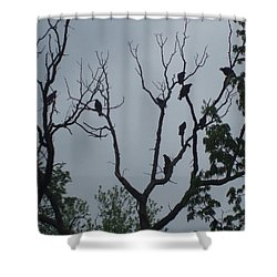 Shower Curtain featuring the photograph Birds by Fortunate Findings Shirley Dickerson