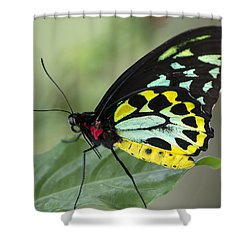 Birdwing Butterfly Shower Curtain by Sean Allen