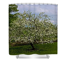 Shower Curtain featuring the painting Birth Of Apples by John Haldane