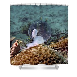 Birth Of Marine Cuttlefish Shower Curtain by Sergey Lukashin