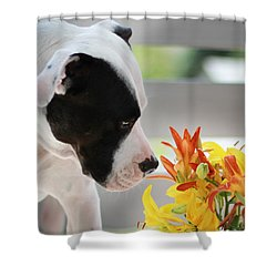 Birthday Bouquet Shower Curtain