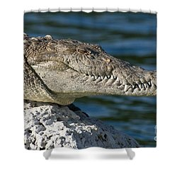 Shower Curtain featuring the photograph Biscayne National Park Florida American Crocodile by Paul Fearn