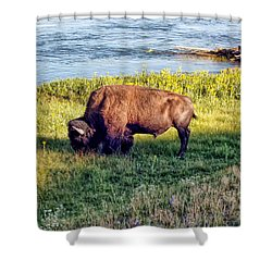 Shower Curtain featuring the photograph Bison 4 by Dawn Eshelman