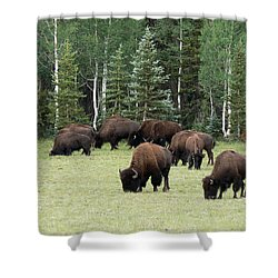 Bison At North Rim Shower Curtain