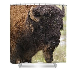 Bison From Yellowstone Shower Curtain by Belinda Greb