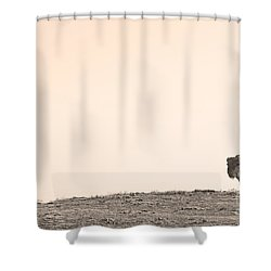 Bison Hill  Shower Curtain by James BO  Insogna
