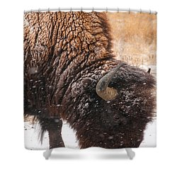 Bison In Snow_1 Shower Curtain