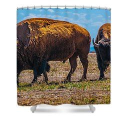 Bison Pair_1 Shower Curtain