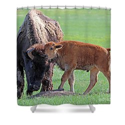 Shower Curtain featuring the photograph Bison With Young Calf by Bill Gabbert