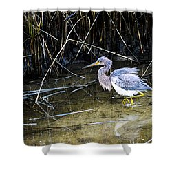 Bittern At Dusk  Shower Curtain by Mary Ward