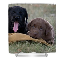 Black And Chocolate Labradors Shower Curtain by Linda Freshwaters Arndt