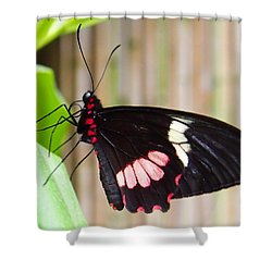 Black And Red Cattleheart Butterfly Shower Curtain by Amy McDaniel
