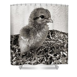 Black And White Baby Chicken Shower Curtain