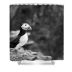 Black And White Black And White Bird Shower Curtain by Anne Gilbert