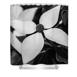 Shower Curtain featuring the photograph Black And White Blossom by Arlene Carmel