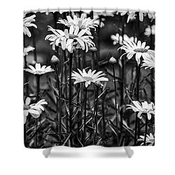 Black And White Daisies Shower Curtain by Mary Carol Story