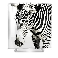 Black And White Shower Curtain by Jenny Rainbow