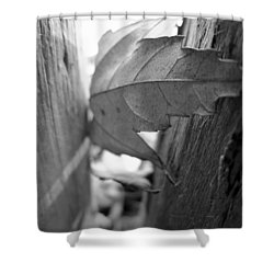 Black And White Leaf At Fort Watauga Shower Curtain
