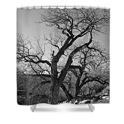 Black And White Oak Shower Curtain by Janice Westerberg