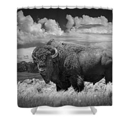 Black And White Photograph Of An American Buffalo Shower Curtain by Randall Nyhof