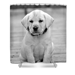 Black And White Puppy Shower Curtain