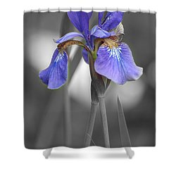 Black And White Purple Iris Shower Curtain by Brenda Jacobs