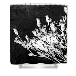 Shower Curtain featuring the photograph Black And White Wildflower by Shawna Rowe