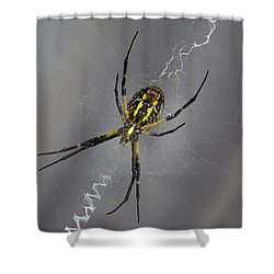 Black And Yellow Argiope Shower Curtain