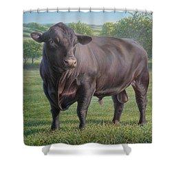 Black Angus Bull 2 Shower Curtain