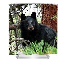 Black Bear 1 Shower Curtain by Will Borden
