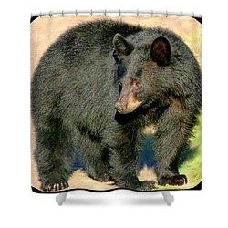 Black Bear 3 Shower Curtain by Will Borden