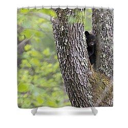 Black Bear Cub In Fork Of Tree Shower Curtain by Dan Friend