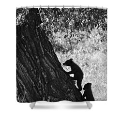 Black Bear Cubs Climbing A Tree Shower Curtain by Crystal Wightman