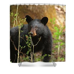 Shower Curtain featuring the photograph Black Bear by Geraldine DeBoer