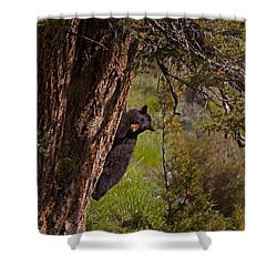 Shower Curtain featuring the photograph Black Bear In A Tree by J L Woody Wooden