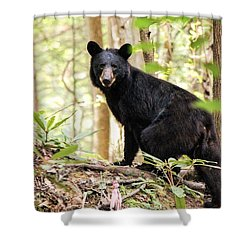Black Bear Smile Shower Curtain by Debbie Green