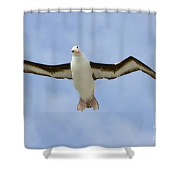 Black-browed Albatross Flying Shower Curtain