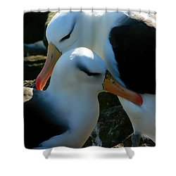 Black Browed Albatross Pair Shower Curtain by Amanda Stadther