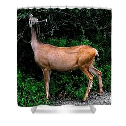 Black Canyon Deer Shower Curtain by Tim Richards