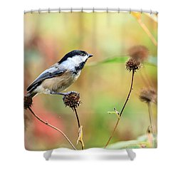 Black Capped Chickadee 1 Shower Curtain