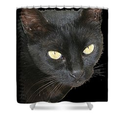 Black Cat Isolated On Black Background Shower Curtain by Tracey Harrington-Simpson